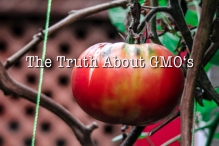 truth-about-gmo