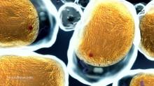 Fat-Cell-Cholesterol-Body