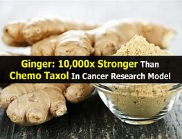 MEDICINE WHEEL: Ginger: 10,000x Stronger Than Chemo (Taxol) in Cancer Research Model Th-2