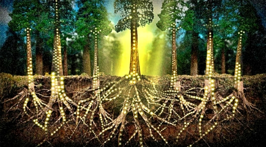 Expert Claims Trees Communicate, Have 'Feelings' & Look After Each Other Like Couples Iuxpgkigns